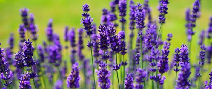 Aromatherapie – wie Düfte auf uns wirken